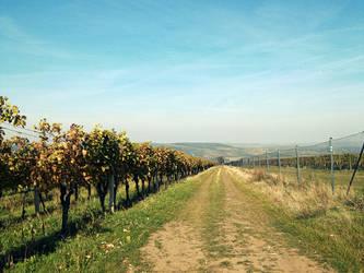 Vineyard road by Favenatig