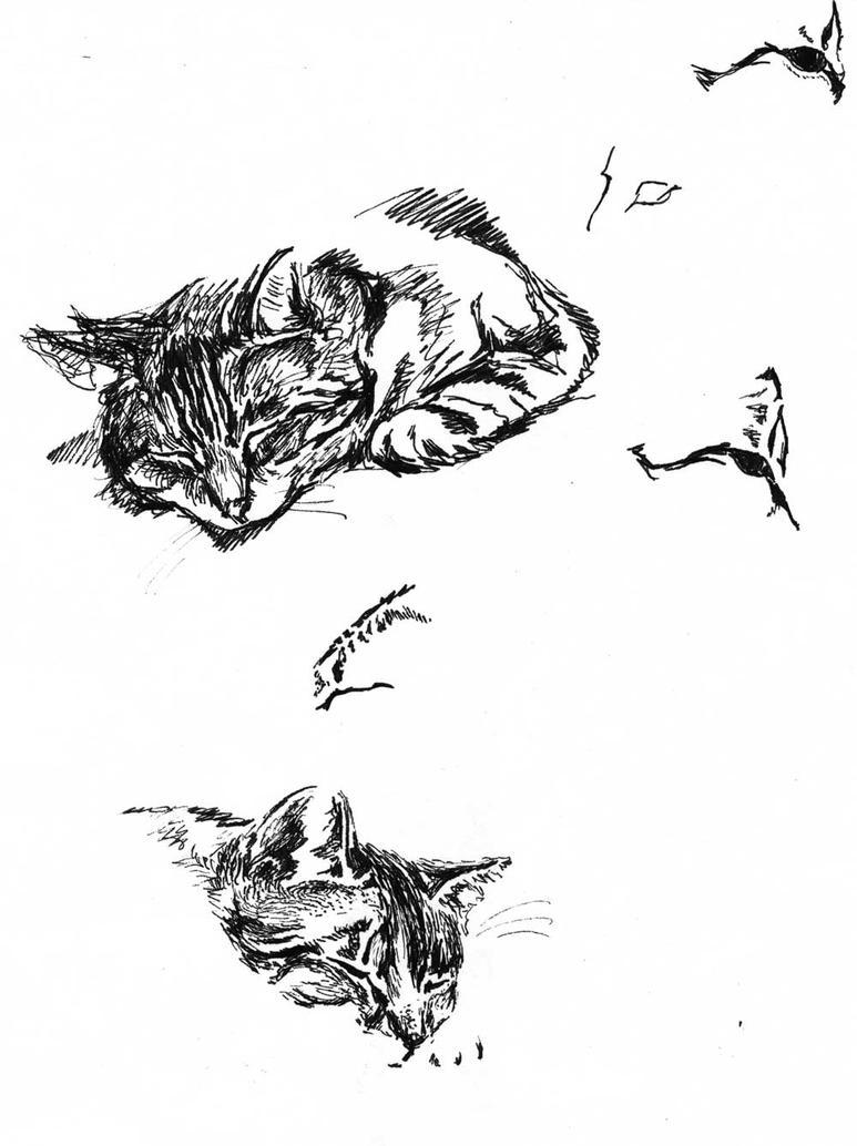cat 2005 by krysiaida