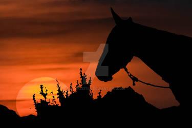 Countryside Sunset Scene Illustration