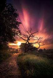 Sunrise dutch national park Sallandse heuvelrug