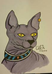 Beerus, the Sphinx House Cat!