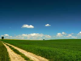 Fields , Wschowa by W0j45