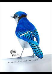 Watercolor Blue Jay.