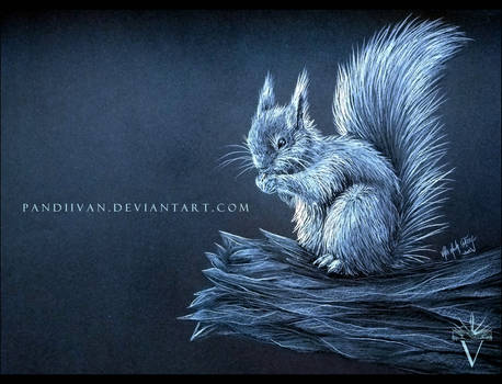 Black Paper Drawing: Little, little Squirrel.