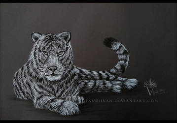 Black Paper Drawing: Tiger. by PandiiVan