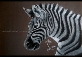 Black Paper Drawing: Zebra