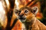 African Lion: Simba
