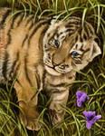 Amur Tiger: Dmitri