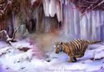 Amur Tiger: Sasha