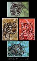 ACEO Cards: The Family Felidae