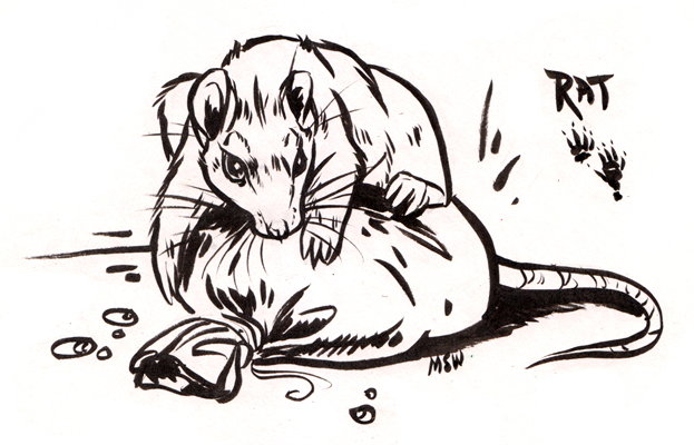 Vesperian Bestiary: Rat by MoonsongWolf