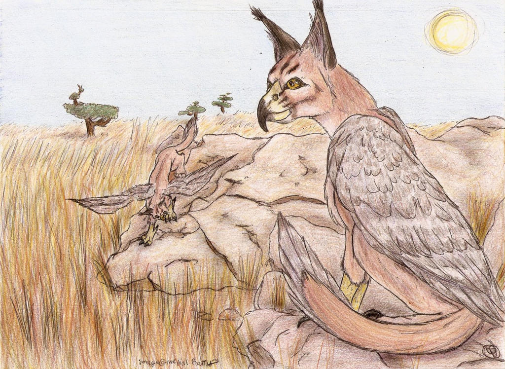 Caracal drawing - photo#21