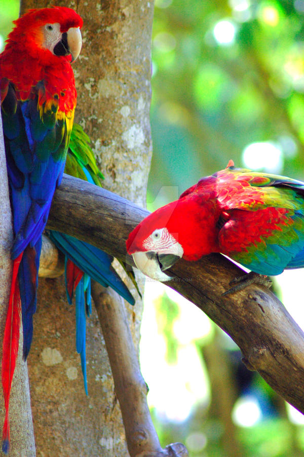 parrots by pureenergy25