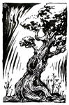 Lone twisted tree