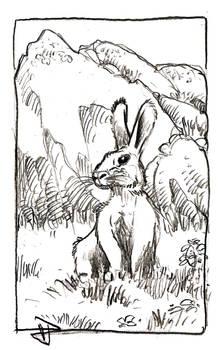 Innocuous Rabbit