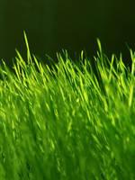 Grass by Bozar88