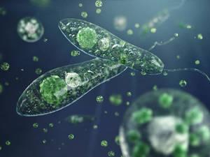 Plankton: protista
