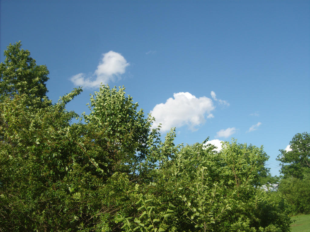 Trees 3 by SweetteeStanley18