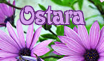 Ostara Stamp by Rohan-killdeer