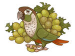 Grape Green cheek conure