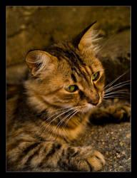 Cat by goranbanina