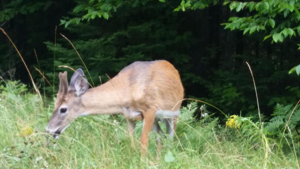 Grazing Buck by MoggieKitten