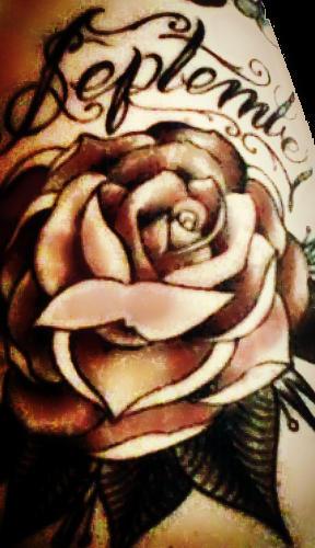 Rose 003 by Jamie-Nicole