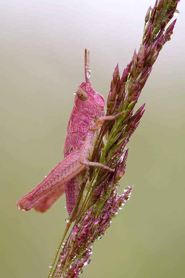 Pretty In Pink by nele102