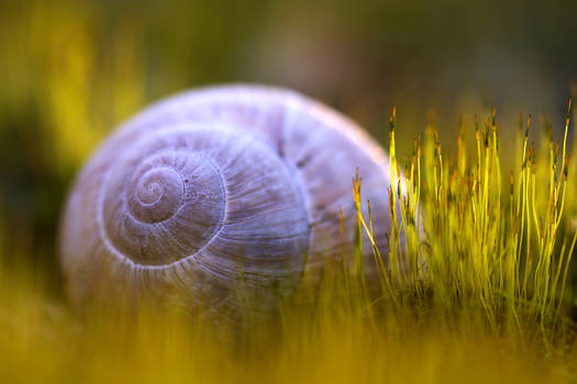 Snail On A Moss Bed