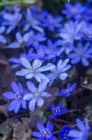 Blue Vogue by BudeanuFrozenAlex