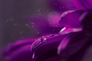 enchanting by Blanchii