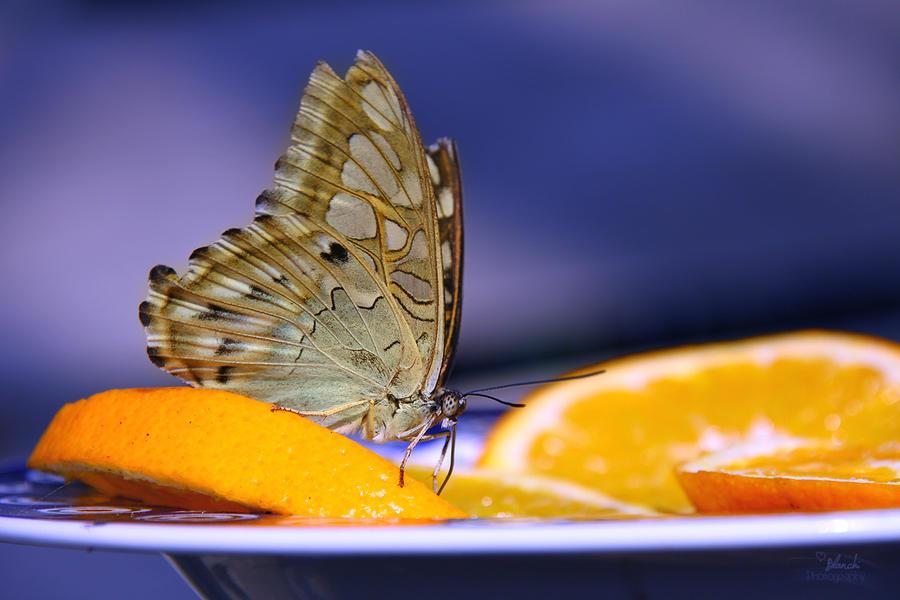 yummy yummy by Blanchii