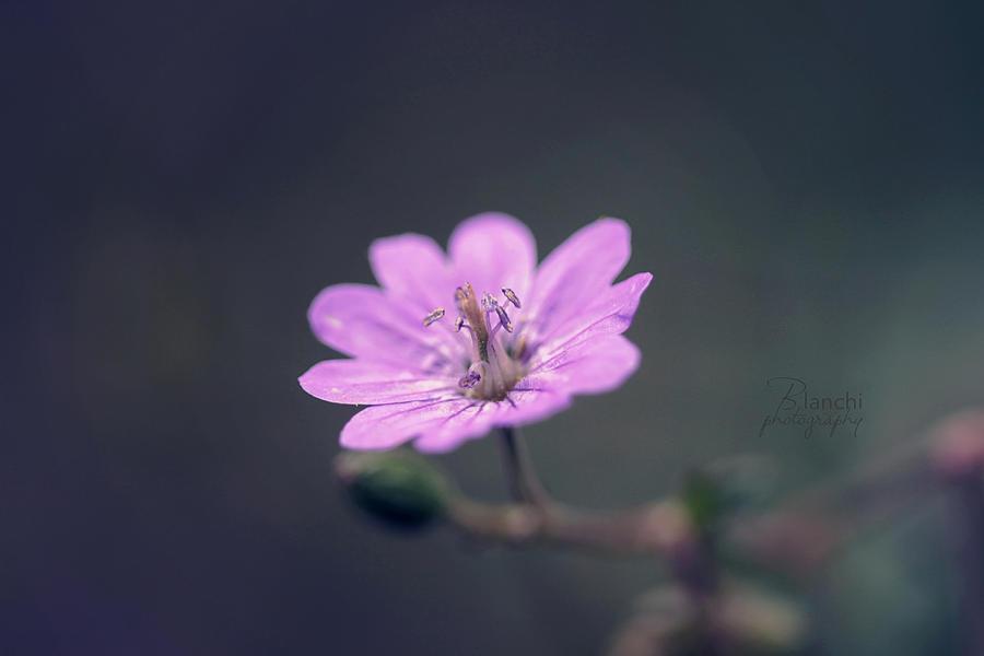 Flower love by Blanchii