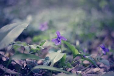 Smooth purple