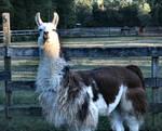stock-llama