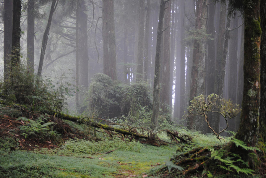 foggy forest by a - photo #33