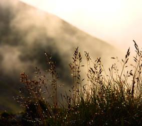 Foggy beggining of something new