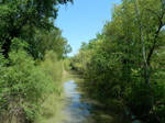 Lush green foliage, Pinios river