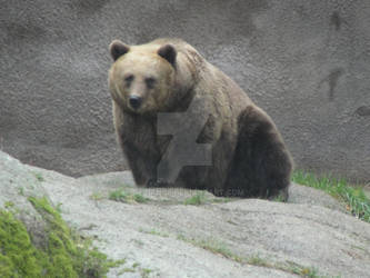 Look of a Bear