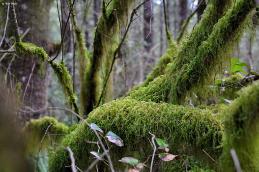 467+ Mossy Branches