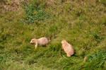 131+ Prairie Dogs