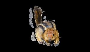 Chipmunk PNG