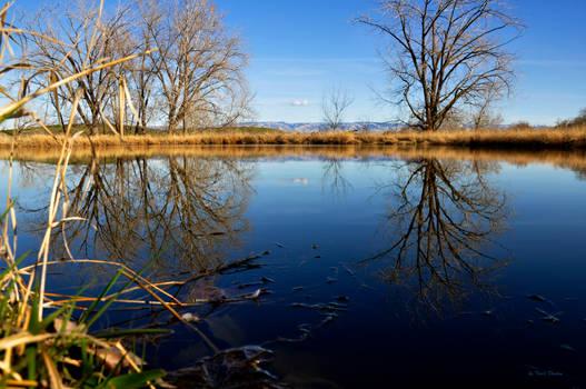 107+ Pond Stock