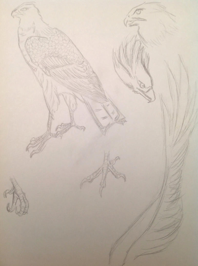 Eagle Sketch by Rainsworld47