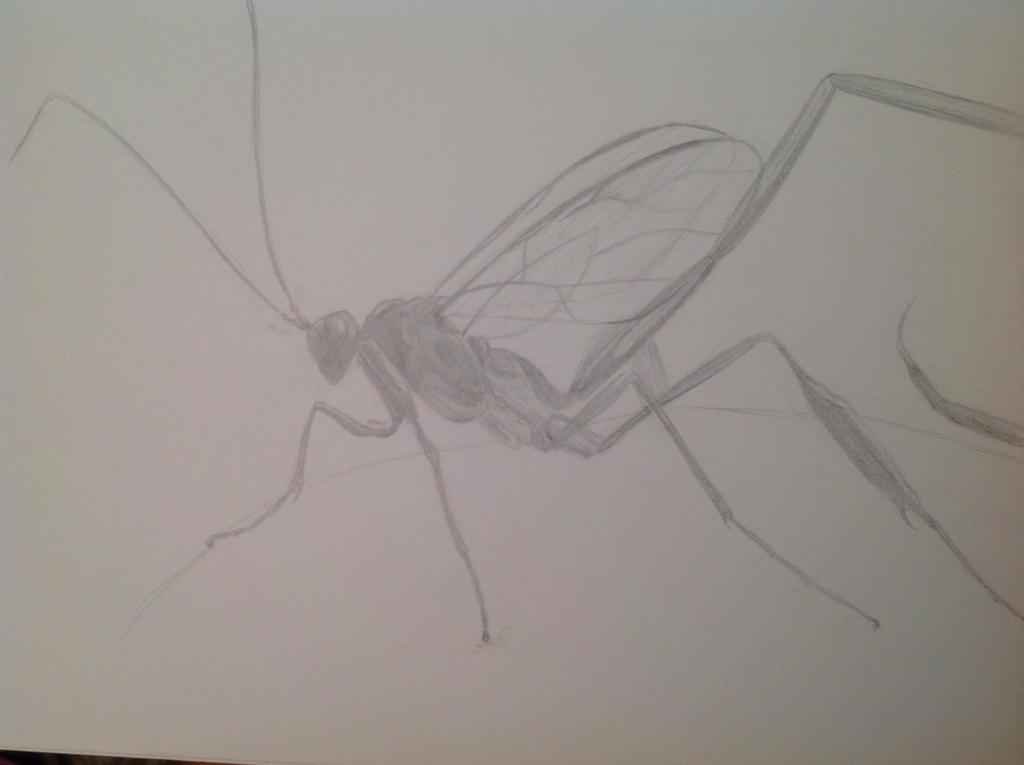 American Pelecinid Wasp by Rainsworld47