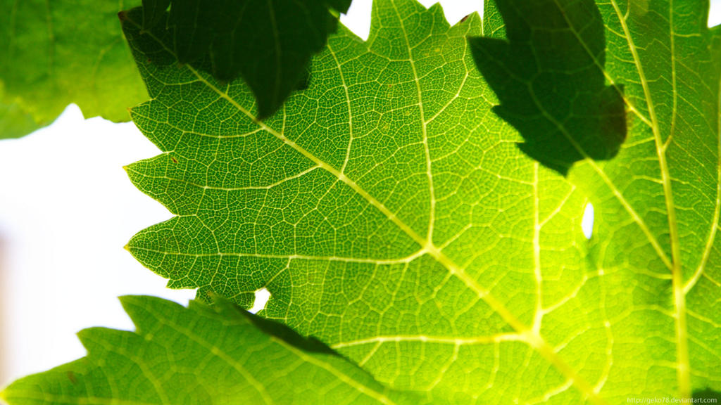 Vine Leafs Hd By Geko78 On Deviantart