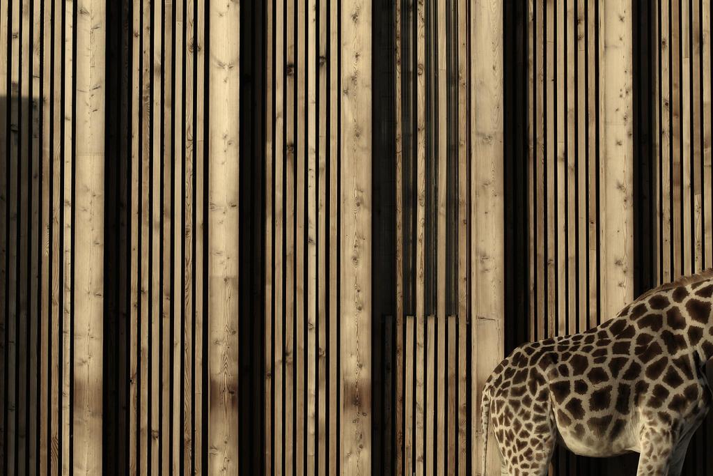Giraffe by djailledie