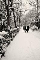 Winter II by djailledie
