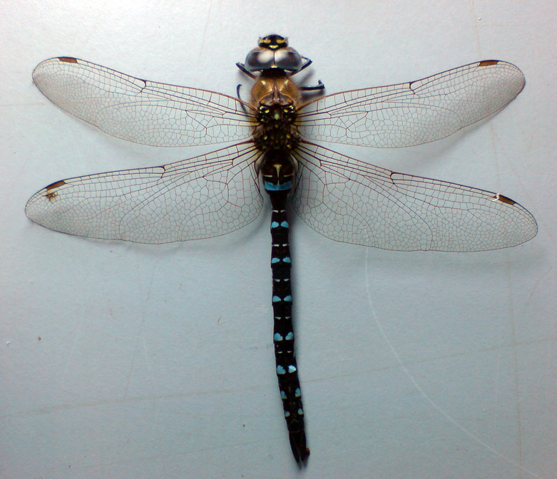 Dragonfly stock image 1