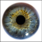 Iris Eye Macro Stock